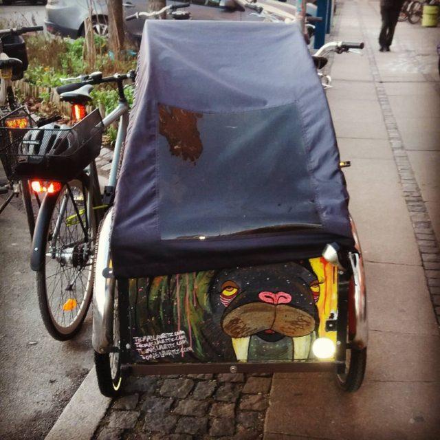 Den lokale hvalros tager ogs cyklen hvalros walrus cargobike ladcykelhellip